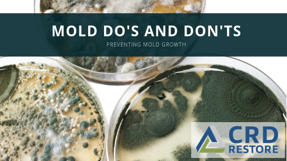 Mold Removal Do's and Don'ts